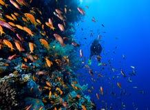 Foto der korallenroten Kolonie stockfoto