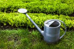 Foto der Metallgießkanne auf Gras am Garten Stockbild