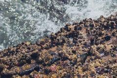 Foto der schönen klaren Seeozean-Wasseroberfläche mit Kräuselungen und des hellen Spritzens auf Meerblickhintergrund Stockfotografie