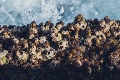 Foto der schönen klaren Seeozean-Wasseroberfläche mit Kräuselungen und des hellen Spritzens auf Steinmeerblickhintergrund Stockfotografie
