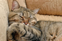 Foto der Schlafenkatze Lizenzfreie Stockfotografie