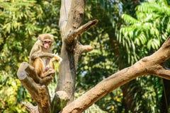 Foto des Affen auf der Niederlassung Stockfotografie