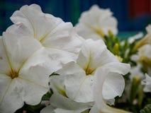 Foto des Blumenwachsens im Stadtpark Lizenzfreie Stockbilder