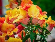 Foto des Blumenwachsens im Stadtpark Lizenzfreies Stockfoto