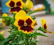 Foto des Blumenwachsens im Stadtpark Stockbild