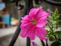 Foto des Blumenwachsens im Stadtpark Lizenzfreies Stockbild