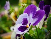 Foto des Blumenwachsens im Stadtpark Lizenzfreie Stockfotografie
