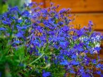 Foto des Blumenwachsens im Stadtpark Stockfotografie
