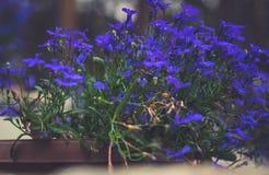 Foto des Blumenwachsens im Stadtpark Stockfoto