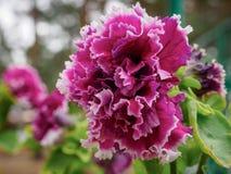 Foto des Blumenwachsens im Stadtpark Lizenzfreie Stockfotos