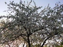 Foto des Frühlingsgartens lizenzfreie stockfotografie