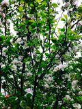 Foto des Frühlingsgartens Lizenzfreie Stockfotos