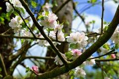 Foto des Frühlingsgartens Stockbild