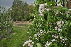 Foto des Frühlingsgartens Lizenzfreies Stockbild