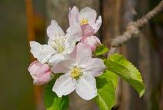 Foto des Frühlingsgartens Stockbilder