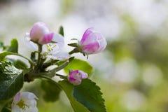 Foto des Frühlingsgartens Lizenzfreies Stockfoto