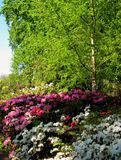 Foto des Frühlingslandschaftshintergrundes eines blühenden dekorativen Parks stockfotos