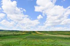 Foto des grünen Weizens, des Mais und der Sonnenblumenfelder mit blauem Himmel Lizenzfreies Stockbild