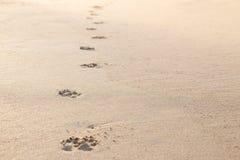 Foto des Hundeabdruckes auf dem tropischen Strand Stockbilder