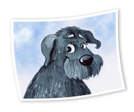 Foto des Hundes Lizenzfreies Stockbild