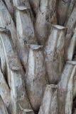 Foto des Palme-Barkehintergrundes lizenzfreie stockfotos