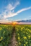 Foto des Rapssamenfeldes mit Sonnenuntergang und drastischen Wolken Lizenzfreie Stockfotos