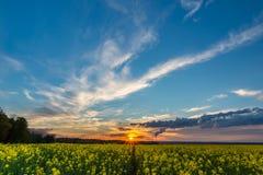 Foto des Rapssamenfeldes mit Sonnenuntergang und nettem cloudscape Stockbilder