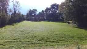 Foto des Rasens, Natur in den Mel die Schweiz Stockbilder