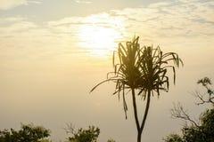 Foto des schönen Sonnenaufgangs Stockfotografie