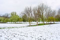 Foto des Schnees im Frühjahr gefallen während der Blütezeit stockbild