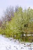 Foto des Schnees im Frühjahr gefallen während der Blütezeit lizenzfreie stockfotografie