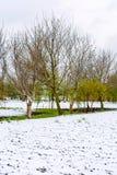 Foto des Schnees im Frühjahr gefallen während der Blütezeit lizenzfreie stockfotos