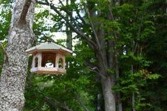 Foto des selbst gemachten hölzernen Vogelhauses im Wald Stockfotografie