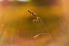 Foto des unscharfen Feldes Aus Fokus Sommer-Herbstsonnenuntergang heraus Stockfoto