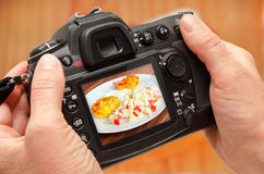 Foto des Vogels auf Kameraanzeige während der Hobbyphotographie in der Natur Stockbilder