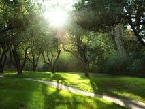 Foto des Waldes mit Schatten und Leuchten Lizenzfreies Stockfoto
