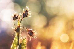 Foto dettagliata del primo piano di alcune piante con le goccioline della rugiada alla luce solare di mattina immagine stock