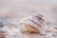 Foto di Abstruct di vecchie coperture a spirale nocive della lumaca Immagini Stock