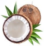 Foto di alta qualità delle noci di cocco. Fotografia Stock
