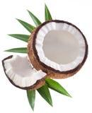 Foto di alta qualità delle noci di cocco. Immagini Stock Libere da Diritti