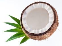 Foto di alta qualità delle noci di cocco Fotografia Stock Libera da Diritti