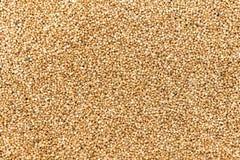 Foto di alta qualità di struttura scura del grano saraceno della farina di grano saraceno premio Immagini Stock Libere da Diritti
