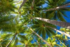 Foto di angolo basso delle palme sulla spiaggia tropicale Fotografia Stock