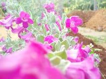 Foto di angolo del primo piano dei fiori di Gardning fotografia stock