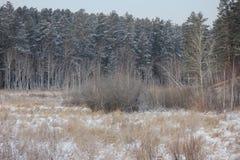 Foto di inverno Immagini Stock
