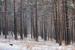Foto di inverno Fotografia Stock Libera da Diritti