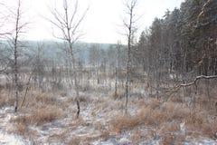 Foto di inverno Fotografie Stock Libere da Diritti