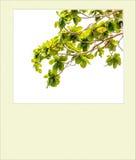 Foto di istante di Branchs immagine stock