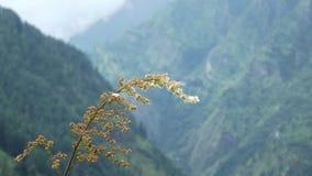 Foto di Landcape in valle parvaty immagine stock libera da diritti
