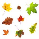Foto di permesso di autunno dell'acero isolata su bianco Fotografia Stock